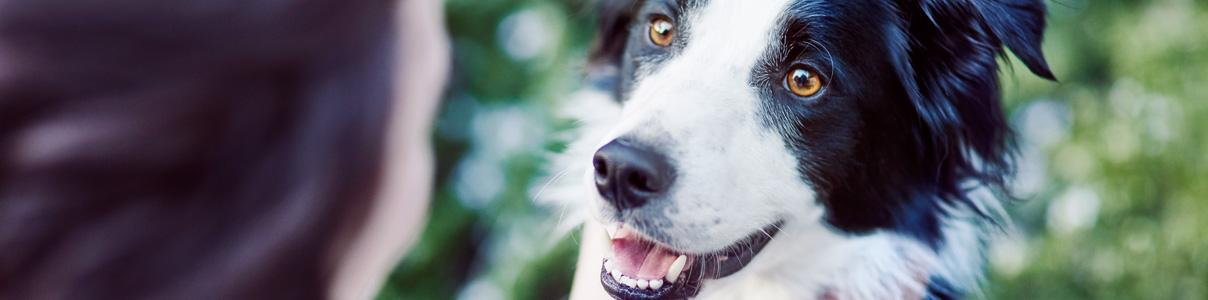 How to spot gum disease in your dog