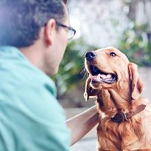 What causes bad breath in dogs?