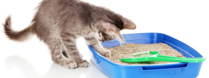 Litter Training your cat